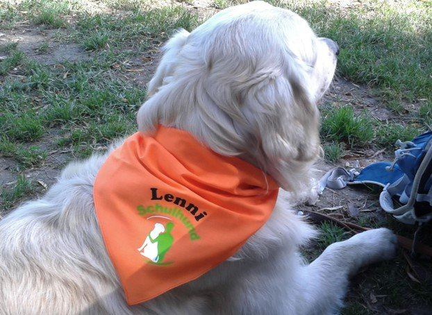 Das ist Lenni. Der Labrador-Retriever ist unser Schulhund. Er gehört zu Frau Dittrich, einer Lehrkraft an unserer Schule.